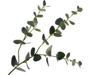 Kunstblume Eukalyptus